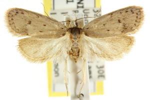 (Eulechria drosocapna - CCDB-15822-B10)  @13 [ ] CreativeCommons - Attribution Non-Commercial Share-Alike (2011) CSIRO/BIO Photography Group Centre for Biodiversity Genomics