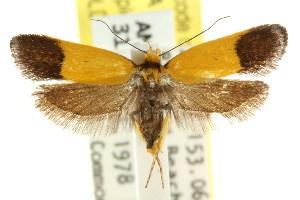 (Eulechria malacoptera - CCDB-15822-E04)  @13 [ ] CreativeCommons - Attribution Non-Commercial Share-Alike (2011) CSIRO/BIO Photography Group Centre for Biodiversity Genomics