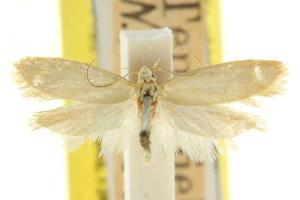 (Eulechria haplophara - CCDB-15822-G10)  @11 [ ] CreativeCommons - Attribution Non-Commercial Share-Alike (2011) CSIRO/BIO Photography Group Centre for Biodiversity Genomics