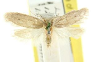 (Eulechria nephelella - CCDB-15824-B12)  @11 [ ] CreativeCommons - Attribution Non-Commercial Share-Alike (2011) CSIRO/BIO Photography Group Centre for Biodiversity Genomics