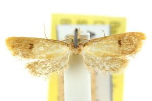 (Eulechria symbleta - CCDB-15824-F04)  @11 [ ] CreativeCommons - Attribution Non-Commercial Share-Alike (2011) CSIRO/BIO Photography Group Centre for Biodiversity Genomics