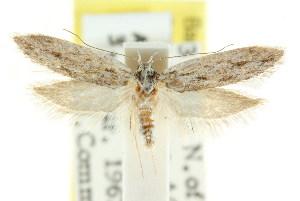(Eulechria homospora - CCDB-15824-G04)  @13 [ ] CreativeCommons - Attribution Non-Commercial Share-Alike (2011) CSIRO/BIO Photography Group Centre for Biodiversity Genomics