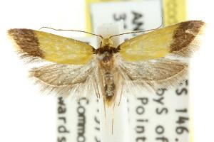 (Eulechria isogramma - CCDB-15824-G12)  @14 [ ] CreativeCommons - Attribution Non-Commercial Share-Alike (2011) CSIRO/BIO Photography Group Centre for Biodiversity Genomics