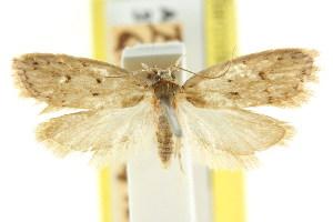 (Eulechria stigmatophora - CCDB-15824-H06)  @11 [ ] CreativeCommons - Attribution Non-Commercial Share-Alike (2011) CSIRO/BIO Photography Group Centre for Biodiversity Genomics