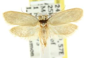 (Eulechria phoenissa - CCDB-15824-H09)  @13 [ ] CreativeCommons - Attribution Non-Commercial Share-Alike (2011) CSIRO/BIO Photography Group Centre for Biodiversity Genomics