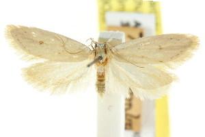 (Eulechria homochra - CCDB-15824-H11)  @11 [ ] CreativeCommons - Attribution Non-Commercial Share-Alike (2011) CSIRO/BIO Photography Group Centre for Biodiversity Genomics