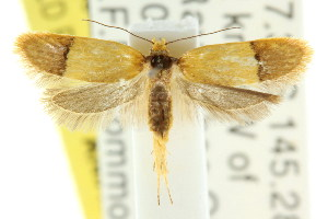(Eulechria hemisphaerica - CCDB-15825-B09)  @13 [ ] CreativeCommons - Attribution Non-Commercial Share-Alike (2011) CSIRO/BIO Photography Group Centre for Biodiversity Genomics