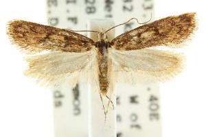 (Eulechria euadelpha - CCDB-15825-B12)  @14 [ ] CreativeCommons - Attribution Non-Commercial Share-Alike (2011) CSIRO/BIO Photography Group Centre for Biodiversity Genomics