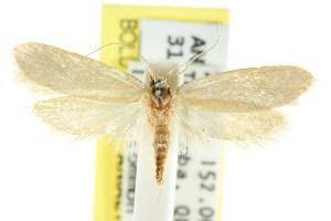 (Eulechria diasticha - CCDB-15825-D06)  @14 [ ] CreativeCommons - Attribution Non-Commercial Share-Alike (2011) CSIRO/BIO Photography Group Centre for Biodiversity Genomics