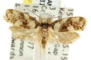 (Eulechria marmorata - CCDB-15825-F05)  @15 [ ] CreativeCommons - Attribution Non-Commercial Share-Alike (2011) CSIRO/BIO Photography Group Centre for Biodiversity Genomics