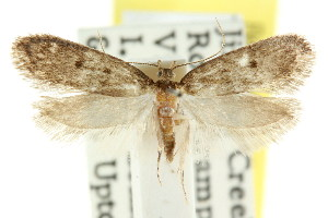 (Eulechria sp. ANIC45 - CCDB-15826-B02)  @11 [ ] CreativeCommons - Attribution Non-Commercial Share-Alike (2011) CSIRO/BIO Photography Group Centre for Biodiversity Genomics