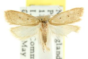 (Eulechria sp. ANIC46 - CCDB-15826-B04)  @11 [ ] CreativeCommons - Attribution Non-Commercial Share-Alike (2011) CSIRO/BIO Photography Group Centre for Biodiversity Genomics