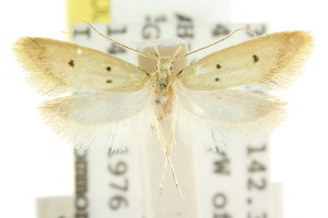 ( - CCDB-15828-A01)  @11 [ ] CreativeCommons - Attribution Non-Commercial Share-Alike (2011) CSIRO/BIO Photography Group Centre for Biodiversity Genomics