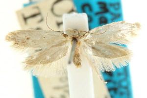 (Macronemata compsa - CCDB-15830-G10)  @11 [ ] CreativeCommons - Attribution Non-Commercial Share-Alike (2011) CSIRO/BIO Photography Group Centre for Biodiversity Genomics
