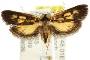 (Eulechria sp. ANIC65 - CCDB-15834-E10)  @14 [ ] CreativeCommons - Attribution Non-Commercial Share-Alike (2011) CSIRO/BIO Photography Group Centre for Biodiversity Genomics