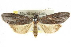 (Calathusa - CCDB-15836-A12)  @15 [ ] CreativeCommons - Attribution Non-Commercial Share-Alike (2011) CSIRO/BIO Photography Group Centre for Biodiversity Genomics