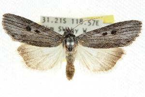 (Calathusa - CCDB-15836-B09)  @15 [ ] CreativeCommons - Attribution Non-Commercial Share-Alike (2011) CSIRO/BIO Photography Group Centre for Biodiversity Genomics