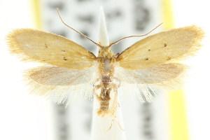 (Atalopsis - CCDB-15838-E05)  @13 [ ] CreativeCommons - Attribution Non-Commercial Share-Alike (2011) CSIRO/BIO Photography Group Centre for Biodiversity Genomics