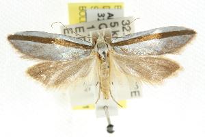(Sympoecila callisceptra - CCDB-15840-E03)  @13 [ ] CreativeCommons - Attribution Non-Commercial Share-Alike (2011) CSIRO/BIO Photography Group Centre for Biodiversity Genomics