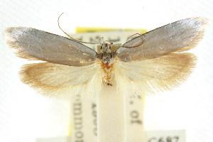 (Sympoecila sp. ANIC7 - CCDB-15840-E12)  @11 [ ] CreativeCommons - Attribution Non-Commercial Share-Alike (2011) CSIRO/BIO Photography Group Centre for Biodiversity Genomics