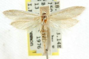 ( - CCDB-15840-H10)  @11 [ ] CreativeCommons - Attribution Non-Commercial Share-Alike (2011) CSIRO/BIO Photography Group Centre for Biodiversity Genomics