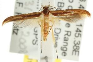 (Ancistroneura sp. ANIC4 - CCDB-15844-E06)  @13 [ ] CreativeCommons - Attribution Non-Commercial Share-Alike (2011) CSIRO/BIO Photography Group Centre for Biodiversity Genomics