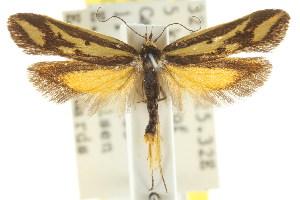 (Corynotricha trimeris - CCDB-15844-G06)  @13 [ ] CreativeCommons - Attribution Non-Commercial Share-Alike (2011) CSIRO/BIO Photography Group Centre for Biodiversity Genomics