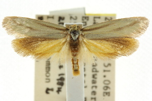 (Corynotricha sp. ANIC6 - CCDB-15844-H09)  @11 [ ] CreativeCommons - Attribution Non-Commercial Share-Alike (2011) CSIRO/BIO Photography Group Centre for Biodiversity Genomics