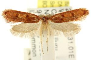 ( - CCDB-15845-G06)  @11 [ ] CreativeCommons - Attribution Non-Commercial Share-Alike (2011) CSIRO/BIO Photography Group Centre for Biodiversity Genomics