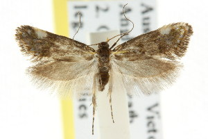 ( - CCDB-15847-D04)  @12 [ ] CreativeCommons - Attribution Non-Commercial Share-Alike (2011) CSIRO/BIO Photography Group Centre for Biodiversity Genomics
