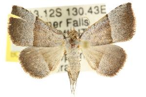 ( - CCDB-15851-D08)  @12 [ ] CreativeCommons - Attribution Non-Commercial Share-Alike (2011) CSIRO/BIO Photography Group Centre for Biodiversity Genomics