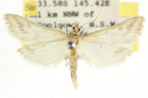 ( - CCDB-15854-H01)  @11 [ ] CreativeCommons - Attribution Non-Commercial Share-Alike (2011) CSIRO/BIO Photography Group Centre for Biodiversity Genomics