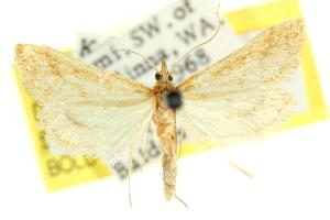 (Sedenia xeroscopa - CCDB-15854-H02)  @11 [ ] CreativeCommons - Attribution Non-Commercial Share-Alike (2011) CSIRO/BIO Photography Group Centre for Biodiversity Genomics