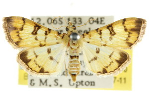 ( - CCDB-15859-B10)  @11 [ ] CreativeCommons - Attribution Non-Commercial Share-Alike (2011) CSIRO/BIO Photography Group Centre for Biodiversity Genomics