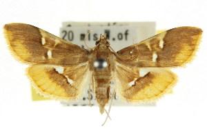 (Prophantis sp. ANIC5 - CCDB-15859-E01)  @11 [ ] CreativeCommons - Attribution Non-Commercial Share-Alike (2011) CSIRO/BIO Photography Group Centre for Biodiversity Genomics