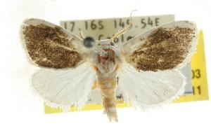 ( - CCDB-15860-D03)  @11 [ ] CreativeCommons - Attribution Non-Commercial Share-Alike (2011) CSIRO/BIO Photography Group Centre for Biodiversity Genomics