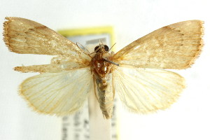 ( - CCDB-15861-B04)  @11 [ ] CreativeCommons - Attribution Non-Commercial Share-Alike (2011) CSIRO/BIO Photography Group Centre for Biodiversity Genomics