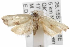 ( - ANIC Gen No. 001866)  @12 [ ] Copyright (2010) Australia National Insect Collection Australia National Insect Collection