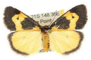 (Castulo plagiata - 10ANIC-00660)  @15 [ ] CreativeCommons - Attribution Non-Commercial Share-Alike (2010) CSIRO/BIO Photography Group Centre for Biodiversity Genomics