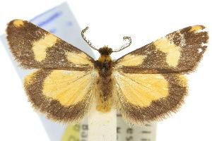 (Castulo - 10ANIC-00662)  @15 [ ] CreativeCommons - Attribution Non-Commercial Share-Alike (2010) CSIRO/BIO Photography Group Centre for Biodiversity Genomics