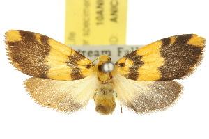 (Symmetrodes - 10ANIC-00728)  @15 [ ] CreativeCommons - Attribution Non-Commercial Share-Alike (2010) CSIRO/BIO Photography Group Centre for Biodiversity Genomics