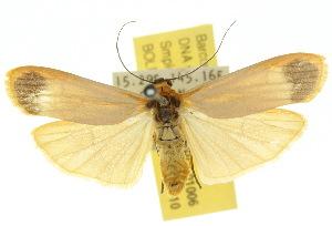 (Brunia - 10ANIC-01006)  @15 [ ] CreativeCommons - Attribution Non-Commercial Share-Alike (2010) CSIRO/BIO Photography Group Centre for Biodiversity Genomics