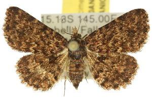 (Artigisa - 10ANIC-01863)  @15 [ ] CreativeCommons - Attribution Non-Commercial Share-Alike (2010) CSIRO/BIO Photography Group Centre for Biodiversity Genomics