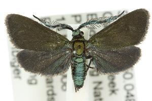 (Australartona - 10ANIC-02225)  @14 [ ] CreativeCommons - Attribution Non-Commercial Share-Alike (2010) CSIRO/BIO Photography Group Centre for Biodiversity Genomics