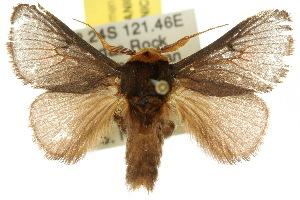 (Parasoidea sp. ANIC1 - 10ANIC-02291)  @15 [ ] CreativeCommons - Attribution Non-Commercial Share-Alike (2010) CSIRO/BIO Photography Group Centre for Biodiversity Genomics
