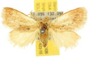 (Comanula - 10ANIC-02420)  @15 [ ] CreativeCommons - Attribution Non-Commercial Share-Alike (2010) CSIRO/BIO Photography Group Centre for Biodiversity Genomics