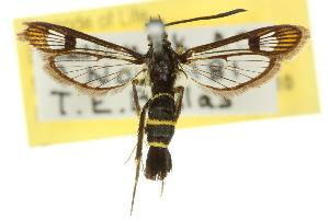 ( - 10ANIC-02606)  @14 [ ] CreativeCommons - Attribution Non-Commercial Share-Alike (2010) CSIRO/BIO Photography Group Centre for Biodiversity Genomics