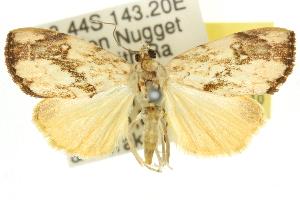 ( - 10ANIC-09847)  @15 [ ] CreativeCommons - Attribution Non-Commercial Share-Alike (2010) CSIRO/BIO Photography Group Centre for Biodiversity Genomics