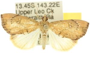 ( - 10ANIC-09848)  @14 [ ] CreativeCommons - Attribution Non-Commercial Share-Alike (2010) CSIRO/BIO Photography Group Centre for Biodiversity Genomics