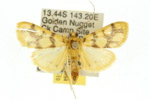 ( - 10ANIC-10994)  @14 [ ] CreativeCommons - Attribution Non-Commercial Share-Alike (2010) CSIRO/BIO Photography Group Centre for Biodiversity Genomics